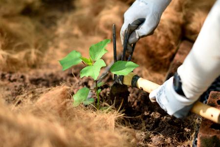 Organic farming Imagens