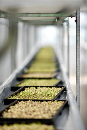 healthful: Organic Vertical farming