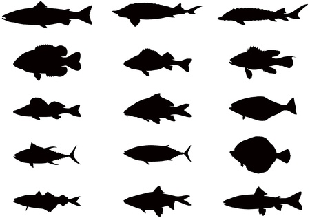 freshwater fish: silhouettes of sea and river fish