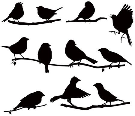 pajaros volando: Im�genes vectoriales siluetas de p�jaros en una rama