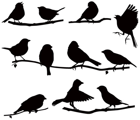 flying birds: Vector images silhouettes of birds on a branch