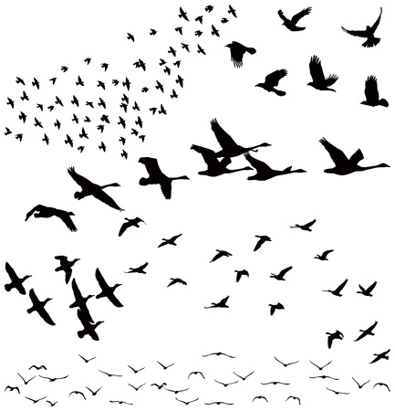 aves: Silhueta de um bando de p�ssaros Ilustra��o