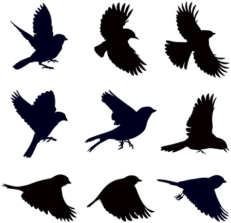 silhouettes of birds, sparrows in different poses