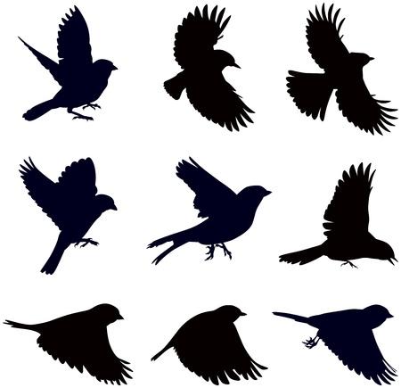 siluetas de pájaros, gorriones en diferentes poses Ilustración de vector
