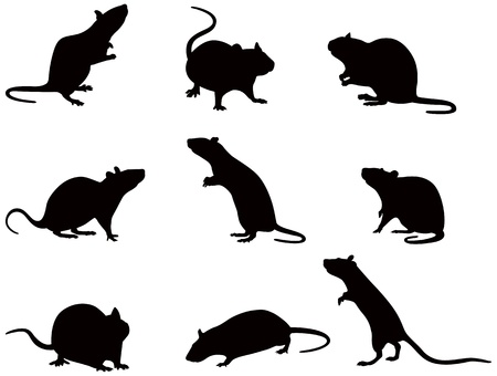 illustration of silhouettes of domestic rats Stock Vector - 20278190
