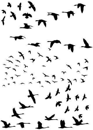 migrating: Stock illustration of a flock of birds flying