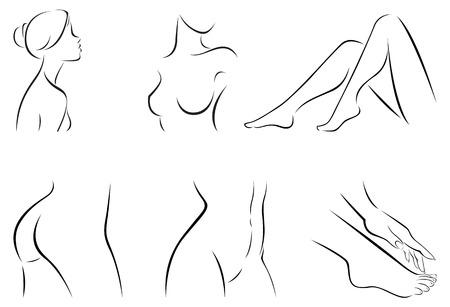 Vector illustration of set of stylized female body parts