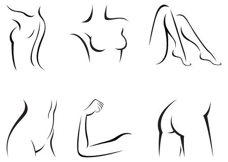 Set stylized female body parts vector illustration of a linear Ilustração
