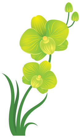 orchid: Orchid flower green and yellow colors Stock vector illustration Illustration