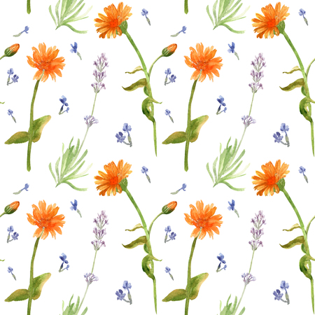 Hand drawn watercolor seamless pattern of calenula officinalis and lavender flowers. Zdjęcie Seryjne