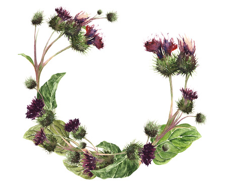 Hand drawn watercolor wreath of a gentle meadow thistle. Botanical vintage watercolor illustration. Design for cards, fabric, textile, cover Stock Photo