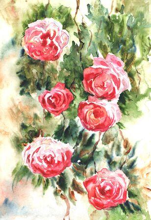 Watercolor climbing roses. Hand drawn watercolor painting