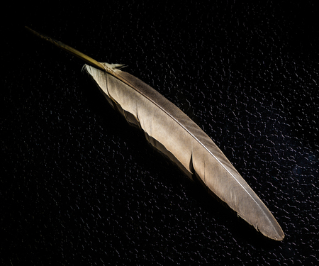 Feather and black background
