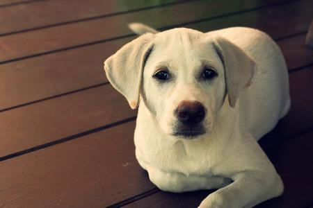 curios: cute puppy looking curios