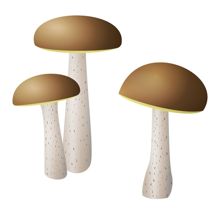 Three Leccinum mushrooms illustration with brown cap Stock Illustration - 17727807