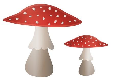 Illustration of mushroom Amanita muscaria with red cap Stock Vector - 17727824