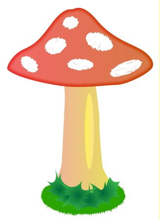 Illustration of mushroom Amanita muscaria with red cap Stock Vector - 17727832