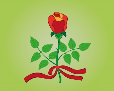 red rose with red ribbon as symbol of love and gift for girl Vector