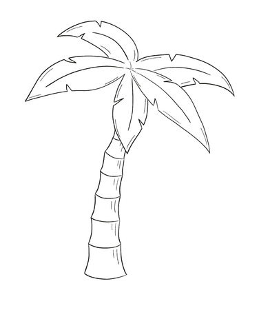 sketch of the palm tree on white background, isolated Vector