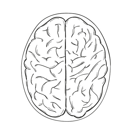 sketch of the human brain on white background, isolated Vector