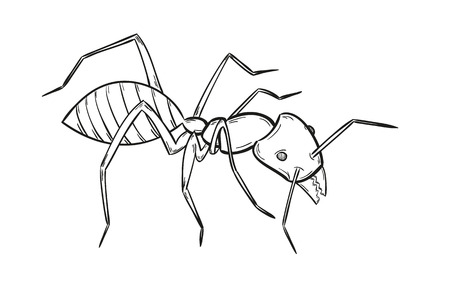 formicidae: sketch of the ant on white background, isolated Illustration