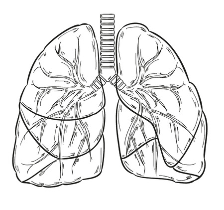 schets van de longen op een witte achtergrond