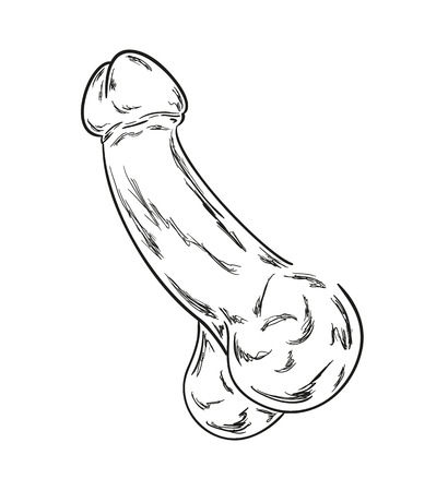 sketch of the human penis on white background