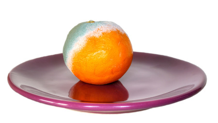 rotten orange on the plate, photo, isolated photo