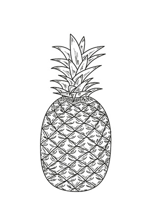ananas: sketch of the ananas with leaves