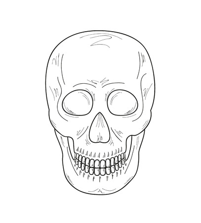 haunt: sketch of the skull on white background, vector