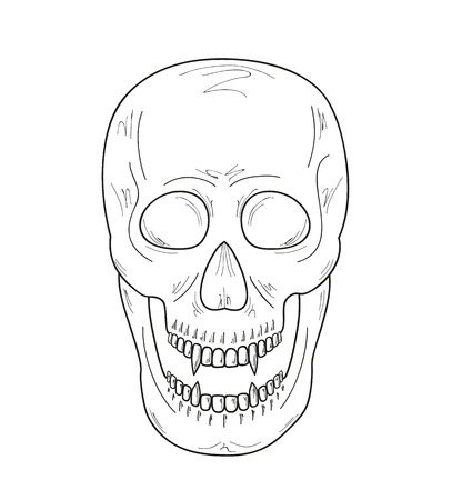 skull with  vampire teeth on white background, vector, sketch