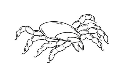 sketch of the dangerous tick on white background, isolated Vector
