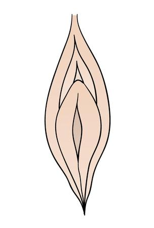female vagina on white background