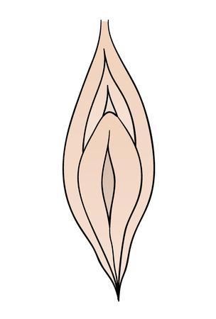 ovarios: vagina femenina en el fondo blanco