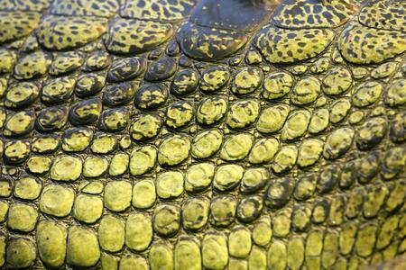 detail photo of the skin of gavial Stock Photo