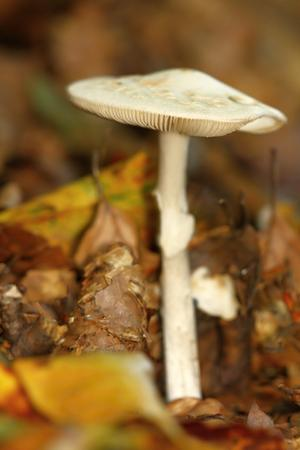 unidentified: one unidentified white mushroom in the forest