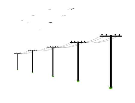 high voltage power lines and birds on white background 版權商用圖片 - 41700397