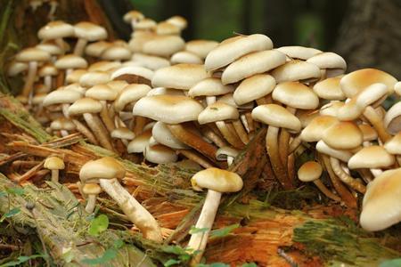 unidentified: muchas setas amarillas no identificados en el bosque