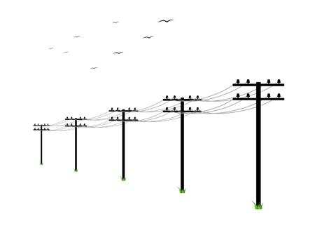 telephone pole: high voltage power lines and birds on white background