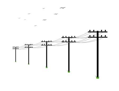 linie wysokiego napięcia i ptaki na białym tle