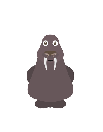 aquatic animal: Walrus illustration as a funny character. Aquatic animal living in the sea. Small cartoon creature, isolated object in flat design on white background.