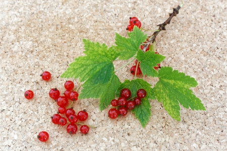 ribes: Red currant berries and green leaves (Ribes rubrum)
