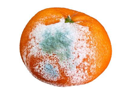rotten and moldy orange on white background, isolated Stock Photo
