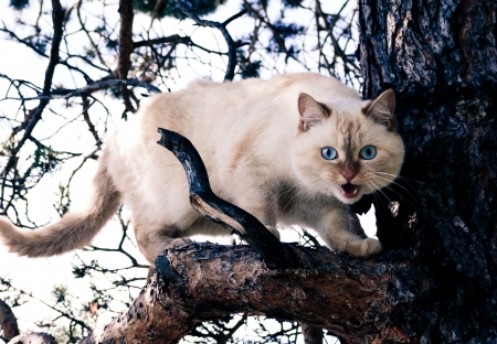 hiss: Wild white cat on a tree branch