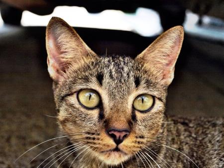 eye: Portrait cat