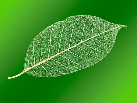 openwork: Openwork leaf. Stock Photo