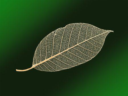 openwork: Openwork leaf