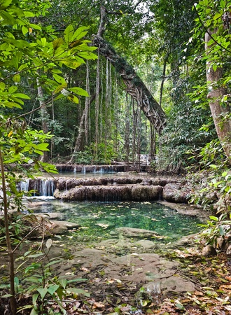 forest stream: Waterfall in the jungle