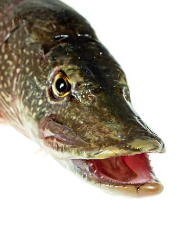Mouth Pike Stock Photo - 9825314