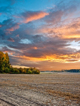 limitless: Rural landscape. Sunset over the field.